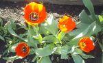 Весна в Вольнянске_15