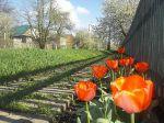 Весна в Вольнянске_1