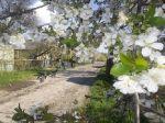 Весна в Вольнянске_2