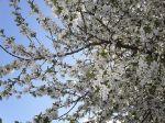 Весна в Вольнянске_5