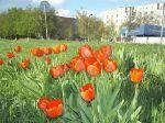 Весна в Вольнянске_7