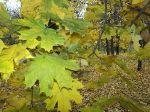 Осень в парке_1