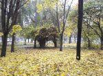 Осень в парке_2