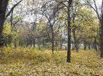 Осень в парке_3