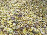 Осень в парке_4