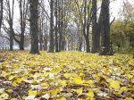 Осень в парке_8