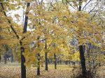 Осень в парке_9